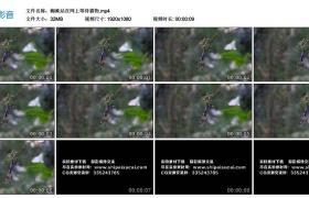 高清实拍视频丨蜘蛛站在网上等待猎物