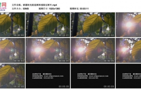 高清实拍视频素材丨移摄阳光射进树林透射过树叶