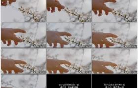 4K实拍视频素材丨特写一只手触摸花朵的花蕊