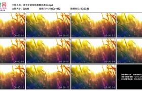高清实拍视频丨逆光中的狗尾草随风摆动 小清新