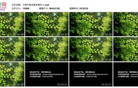 4K视频素材丨下雨天雨水落在树叶上