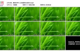 高清实拍视频丨嫩绿的草叶上挂着露珠反射阳光