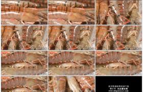 4K实拍视频素材丨拍摄旋转着的新鲜虾子