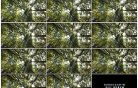 4K实拍视频素材丨仰拍晴天阳光照射下的竹林