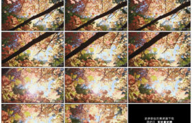 高清实拍视频素材丨向前移摄阳光透射过秋天黄色的树叶