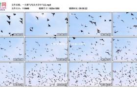高清实拍视频素材丨一大群飞鸟从天空中飞过