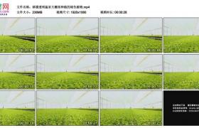 高清实拍视频素材丨移摄透明温室大棚里种植的绿色植物