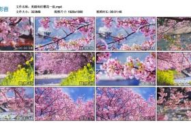 【高清实拍素材】春天美丽绚烂樱花一组