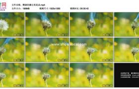 高清实拍视频素材丨燃烧的蒲公英花朵