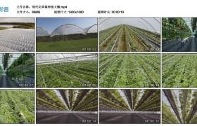 高清实拍视频丨现代化草莓种植大棚