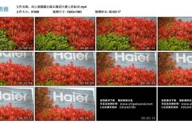 高清实拍视频丨向上摇摄露出海尔集团大楼上的标识