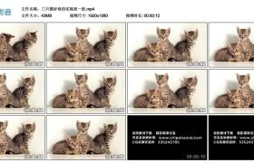 高清实拍视频丨三只猫好奇的视线很一致