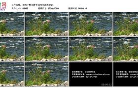 高清实拍视频丨阳光下野花野草边河水流淌