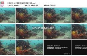 4K实拍视频素材丨水下摄影 海底的珊瑚礁和鱼群