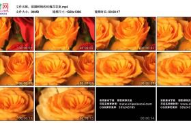 高清实拍视频丨摇摄鲜艳的玫瑰花花束
