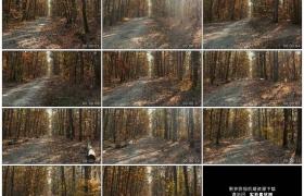 4K实拍视频素材丨行驶在秋天阳光照射着的黄色树林中铺着落叶的道路上
