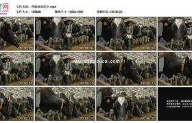 高清实拍视频素材丨养殖场里的牛