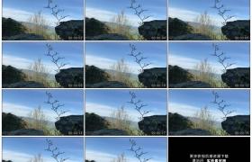 高清实拍视频素材丨早春乡村山坡岩石前正发芽的树枝随风摆动