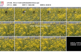 高清实拍视频素材丨两名女子从春天金黄色的油菜花田里走过