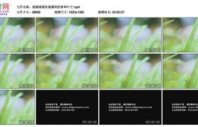 高清实拍视频素材丨摇摄清晨挂着露珠的青草叶子