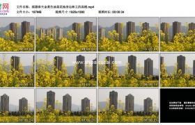 高清实拍视频素材丨摇摄春天金黄色油菜花地旁边林立的高楼
