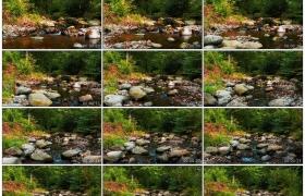 4K实拍视频素材丨树林里小溪流淌