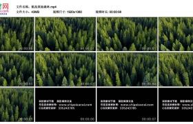 高清实拍视频丨航拍原始森林