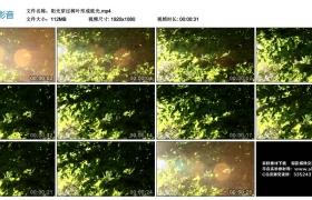 高清实拍视频丨阳光穿过树叶形成眩光