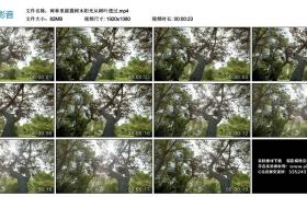 高清实拍视频丨树林里摇摄树木阳光从树叶透过