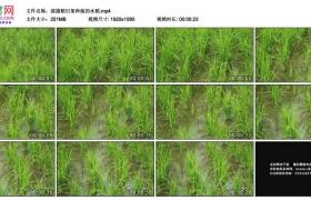 高清实拍视频素材丨摇摄稻田里种植的水稻