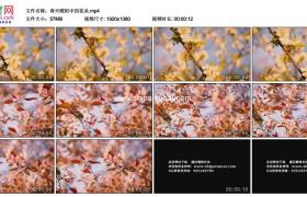 高清实拍视频素材丨春天暖阳中的花朵