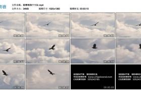 高清实拍视频丨雄鹰翱翔于天际