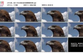 高清实拍视频丨蓝天下阳光照射着的雄鹰鹰眼四顾