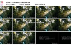 高清实拍视频素材丨阳光透过树缝照进带瀑布的森林