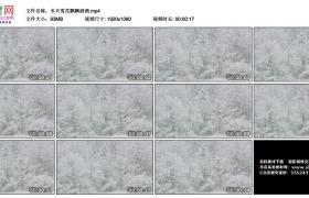 高清实拍视频丨冬天雪花飘飘洒洒