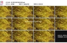 4K实拍视频素材丨秋天黄色的树叶随风轻摆