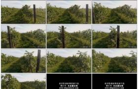 高清实拍视频素材丨航拍春天开花的苹果园