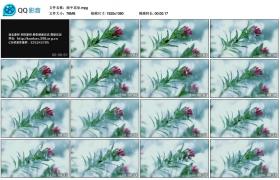 [高清实拍素材]雨中花朵