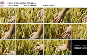高清实拍视频素材丨特写女人手抚摸过农田里的麦穗