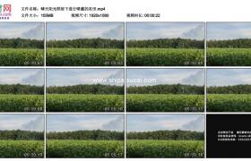 高清实拍视频素材丨晴天阳光照射下进行喷灌的农田