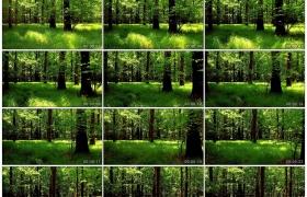 4K实拍视频素材丨阳光照射下的树林和草地