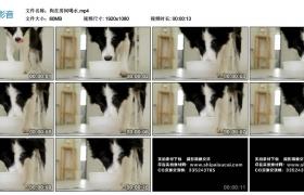 高清实拍视频丨狗在房间喝水