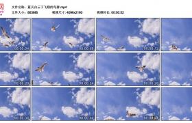 4K视频素材丨蓝天白云下飞翔的鸟群