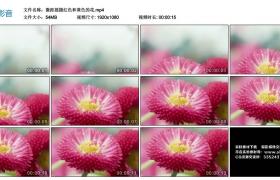 高清实拍视频丨微距摇摄红色和黄色的花