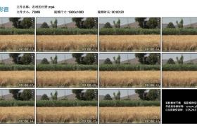 高清实拍视频丨农村的田野