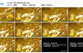 【高清实拍素材】暖阳中随风摇曳的黄叶