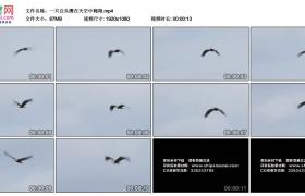 高清实拍视频素材丨一只白头鹰在天空中翱翔