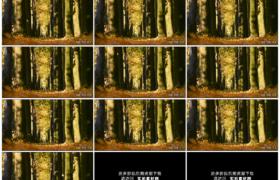 高清实拍视频素材丨特写秋天阳光照射进树林里黄叶飘落
