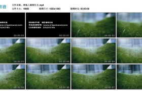 【高清实拍素材】草地上植物生长