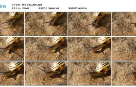 4K视频丨蜗牛在地上爬行